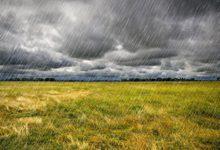 Vihmariided kategooria pilt